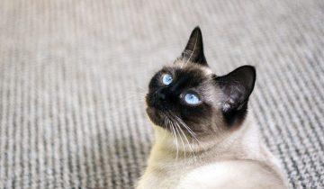 Беременная кошка металась из угла в угол и молила о помощи. Появившиеся на свет котята раскрыли секрет ее поведения