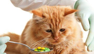 Как правильно давать лекарство кошке: отличные советы