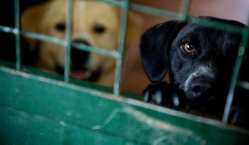 Семья 27 часов ждала в приюте, чтобы забрать очень необычную собаку