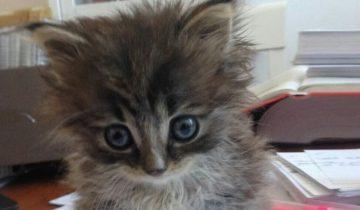 Бездомная кошка принесла женщине, которая ее кормила, маленький сюрприз