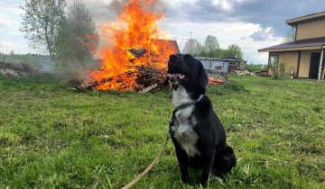 Люди спасли безумно красивую собаку с трагической судьбой