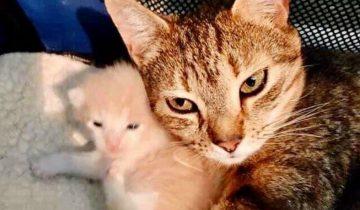Кошку забрали в приют, но она постоянно плакала – выяснилось, на улице ее ждали котята