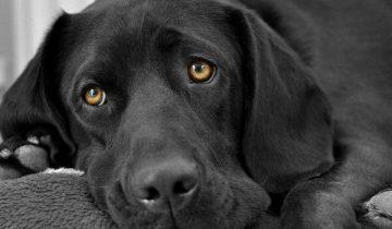 Бесконечно долгий год ожидания и тоски: история одной собаки