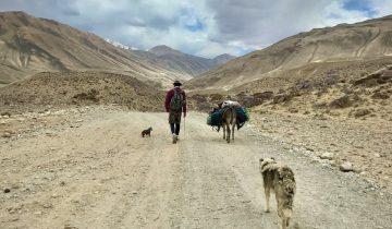 Хромоногий кочевник Джек. Изуродованный пес прошел более 150 км