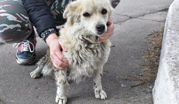 Маленькая собачка жила на улице. После купания и стрижки она преобразилась и нашла дом