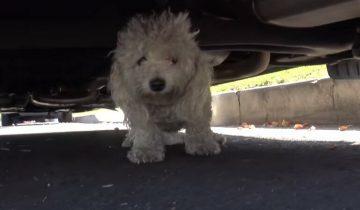 Испуганный песик сидел под машиной и ждал помощи, но никто не спешил его спасти
