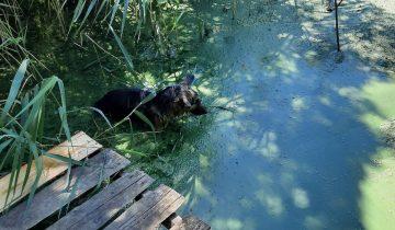 Приехав на рыбалку, парень нашел в пруду щенка овчарки. Оказалось, он был никому не нужен