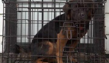 Хозяйка посадила щенка в маленькую клетку и не впускала в дом. Соседи решили ему помочь