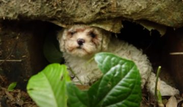 Голодных щенков выбросили в кустарник, они были очень напуганы
