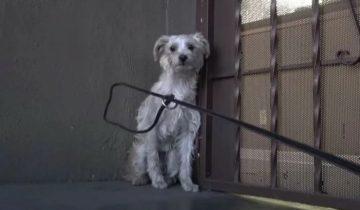 Собаку предал хозяин, поэтому она осталась жить возле старой школы