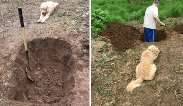 Хозяин копал яму для своей собаки, а пёс стоял и смотрел на свою могилу