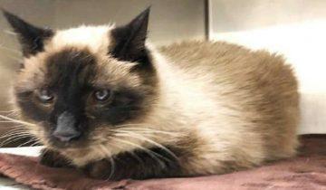 «Мне придется отдать кота вам»: рыдающая женщина была вынуждена расстаться со своим питомцем