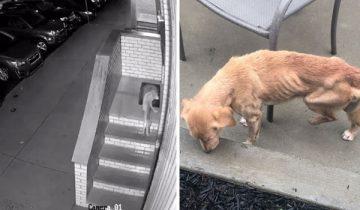Парень оставил дверь открытой и к нему пришла собака, которая нуждалась в помощи