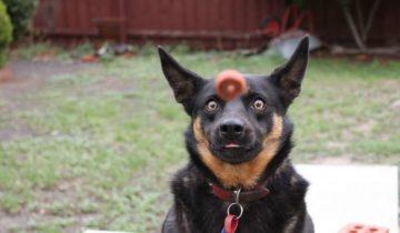 Случайный кадр – самый кайф! 10 фото с собаками, снятые в нужный момент
