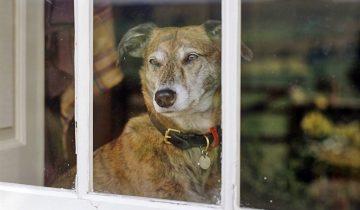 Как собака понимает, что хозяин скоро придет домой?