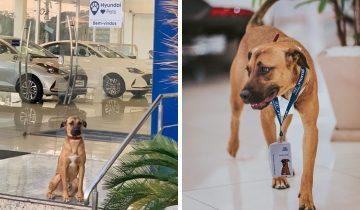 Бездомный пёс часто появлялся у автосалона. Сотрудники решили взять его на работу