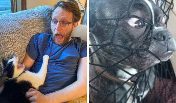 10 забавных фото собак и котов, которые точно передают дурашливость наших питомцев