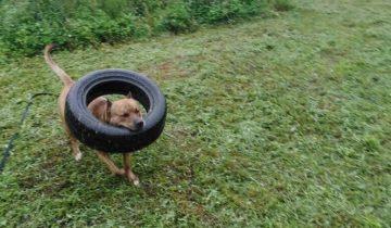 Рокки — пес спасенный от гибели