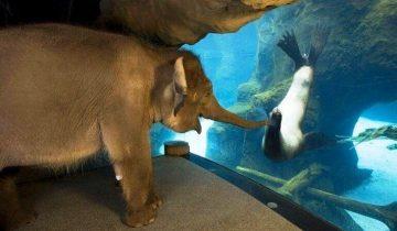 Вот именно поэтому животным не нужны слова, чтобы выразить свои эмоции