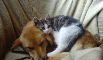 История из реальной жизни: дружба Кузи и Кити