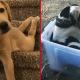 10 забавных песиков, которые совершенно не умеют быть собакой