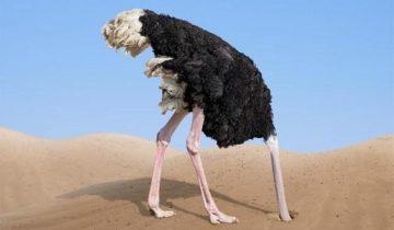 Правда ли, что страус прячет голову в песок или это миф?