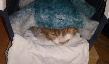 31 декабря на рынке появилась худая кошка. И только один парень решил её спасти
