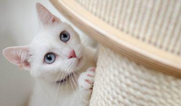 Что делать, если ваша кошка дерёт обои