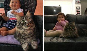Пушистый нянь: огромный кот пришел на ферму и стал другом для малышки