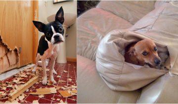 Тайная жизнь домашних животных: чем занимаются питомцы когда сами остаются дома?