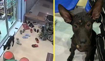 Потерявшийся песик пришел в ветеринарную клинику, чтобы его поскорее вернули домой