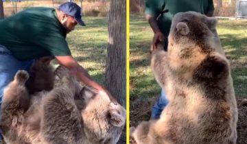 Мужчина пришел в гости к осиротевшей медведице, которую он когда-то выкормил