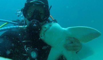 Не все акулы кусаются: история дружбы дайвера и бычьей акулы