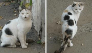 История о Глаше: уличной кошке, которая пришла за помощью к людям
