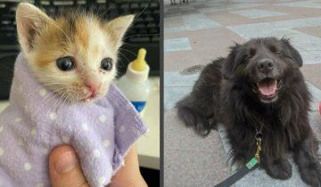 10 очень милых фото спасенных животных, которые обрели дом