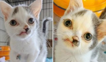 Маленький котенок с особенной внешностью собирал объедки по улице