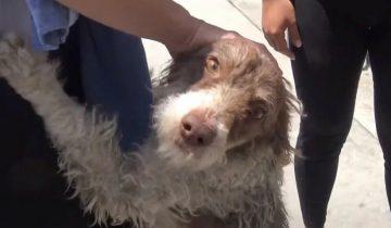 Брошенной на произвол судьбы собаке с недавно рождёнными щенками, помогла выжить добрая девушка