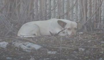 Бездомного пса хотели усыпить, но парень вырвал его из рук отловщиков