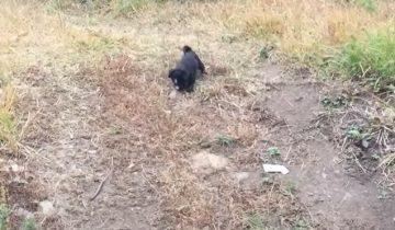 Владельцы бросили щенков в лесу: они голодали, их мучала жажда, клещи, но они справились