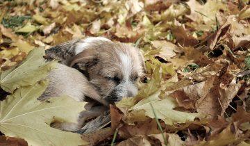 Маленький комочек, не имеющий своего дома, укрывался в осенней листве