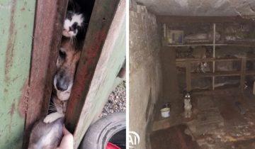 Волонтёры спасли 15 животных, закрытых в гараже у «собирательницы» животных