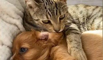 Как бездомный кот защищал щенка-потеряшку и чем эта история закончилось