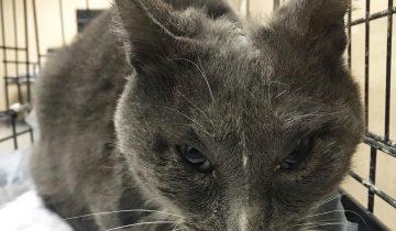 История котика Ганса с огромным ожогом почти во всё тело