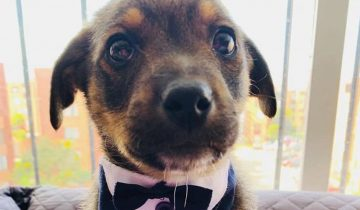 Печальная история щенка из приюта растрогала соцсети