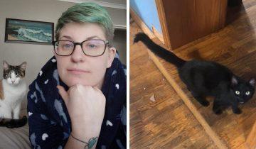 12 случаев, когда коты беспардонно приходили в чужие дома и чувствовали себя чудесно