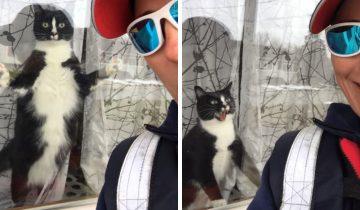 Почтальон засняла кота, который отчаянно защищает дом
