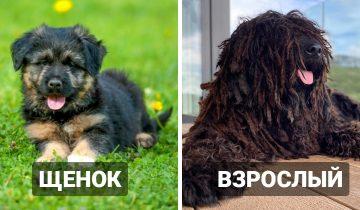 10 собак, которые в детстве выглядели так, словно они другой породы