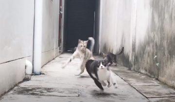 Дворовые коты хотели избить кошечку, но она их лихо «уделала»