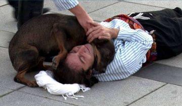 Бездомная собака вмешалась в спектакль, чтобы «спасти» актера, и растрогала зрителей