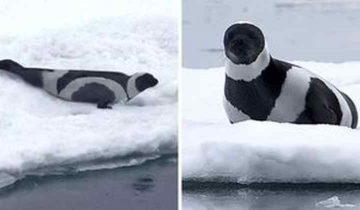 Черно-белые представители животного мира. И они прекрасны